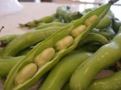 fave, fave fresche, calorie fave, proprietà fave, storia fave, parkinson, cura fave, dieta fave