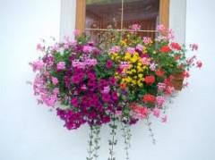 fiori, balconi, fiori ai balcono, balconi fioriti, scegliere i fiori,